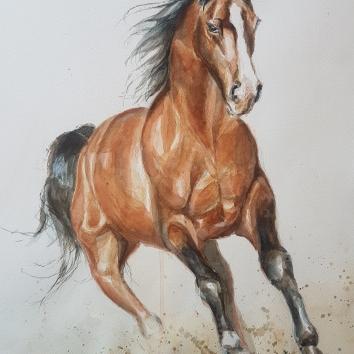Aquarell, 40 x 50 cm